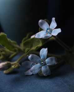 A place for things that make my heart beat faster Dark Art Photography, Floral Photography, Blue Flowers, Fotografia Floral, Belle Plante, Chiaroscuro, My Secret Garden, Gardens, Backgrounds