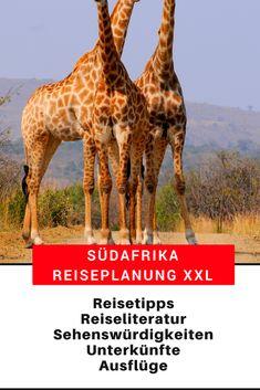 Südafrika Reisetipps: Top10 Orte, Reiserouten, Reisetipps Hotels und Ausflüge, Reiseveranstalter, Reiseliteratur, Flüge, Mietwagen, Camper #Südafrika #Reisetipps #Reiseplanung