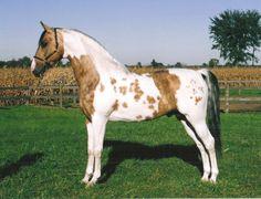horse color unique