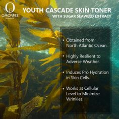 Sugar Seaweed Extracts for Your Skin Rejuvenation. Frankincense Oil, Cellular Level, Skin Toner, Facial Care, Seaweed, Anti Aging, Ocean, Sugar, Face Care Routine