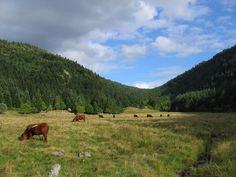 Les monts du Forez sont une chaîne de montagne du Massif central séparant la vallée de la Dore de la plaine du Forez. Ils culminent à Pierre-sur-Haute à 1 634 mètres d'altitude. En savoir plus sur http://www.sejour-touristique.com/vacances-en-france/decouverte-de-nos-regions/auvergne/les-monts-du-forez.html#rBWqliG46PmxhRE7.99