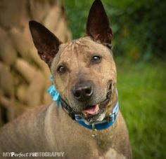 Cinder - please visit the Soffer and Fine Adoption Center in North Miami Beach Animal ID 2373508 Breed:Chinese Shar-Pei/Terrier, Bull Age 8 Male Spayed/Neutered Housetrained: Partially, No Dogs No Cats, LocationWaggersville 2 Intake Date 5/30/2015 Adoption Price$100.00 Stage: Available http://www.humanesocietymiami.org/adopt-a-dog/