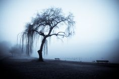 Calm, insightful and wise beyond their years, the Old Soul perceives the world with ancient eyes, and comprehends the world with an ancient soul. 35 Profound Old Soul Quotes. Weeping Willow, Willow Tree, Old Soul Tattoo, Seele Tattoo, Old Soul Quotes, Earth Wind & Fire, Old Trees, In The Tree, Amazing Nature