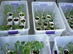 Clear Storage Tote Greenhouse | DIY Seedling Greenhouses Ideas For Your Garden This Spring