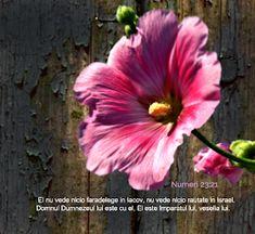 Versete de Aur : 01.11.2013 - 01.12.2013 Aur, Plants, Plant, Planets
