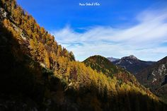 Scenic view of colorful forest in the bottom parts of Kamnik-Savinja Alps in autumn
