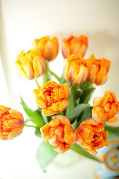 how to keep tulips from drooping {stevie pattyn for shop sweet lulu} put a penny in the water -- who knew!?