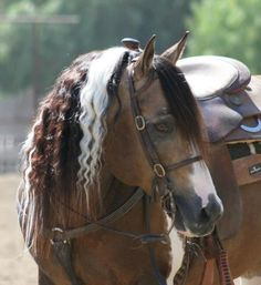 Beautiful American quarter horse. Love that mane!