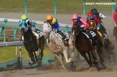 Horse Racing, Goats, Polo, Horses, Twitter, Animals, Polos, Animales, Animaux