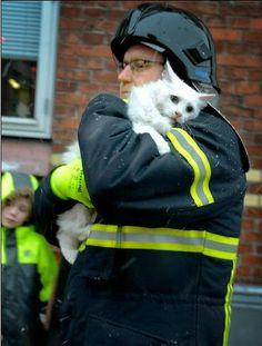 Спасенный кот: Эти глаза говорят сами за себя