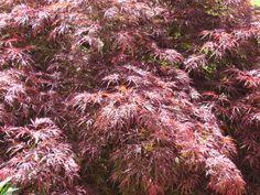 Clarksville, TN  tree