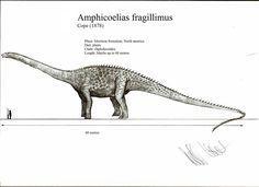 Amphicoelias fragillimus by Teratophoneus on DeviantArt