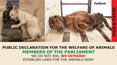 Petition · Members of Parliament we do not ask!We demand! ESTABLISH_LAWS FOR THE ANIMALS NOW: PUBLIC DECLARATION FOR THE WELFARE OF ANIMALS · Change.org
