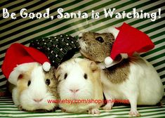 Be Good Santa is Watching  5PC GUINEA PIG Christmas by JenKlimas