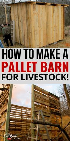 Building a barn on your homestead doesn't have to be expensive. You can make a full size barn using recycled pallets. Here's how to make a pallet barn- goat goats, sheep, or any other livestock Backyard Poultry, Chickens Backyard, Pallet Barn, Pallet Benches, Pallet Couch, Pallet Tables, Outdoor Pallet, Barn Layout, Barn Stalls