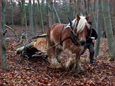 Jysk Hest Big Horses, Clydesdale, Draft Horses, Horse Breeds, Beautiful Horses, Ancestry, Denmark, Drawings, Nature