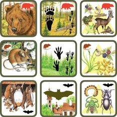 Pexetrio Plus: Savci Science For Kids, Science And Nature, Art For Kids, Animal Activities, Preschool Activities, Animals For Kids, Animals And Pets, Printable Board Games, Animal Tracks