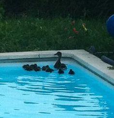 Tout le monde aime les piscines Desjoyaux !