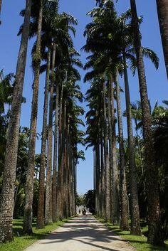 Jardim Botânico - Foto: Alexandre Macieira | Riotur