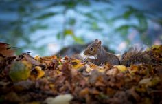 Baby Squirrel  Animals photo by EmanueleBissoli http://rarme.com/?F9gZi