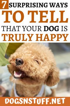 These are the top 7 sure ways to tell that your dog is truly happy with your company! Wild Animals Pictures, Dog Health Tips, Pet Fox, Dog Facts, Cute Dogs, Awesome Dogs, Training Your Puppy, Dog Rules, Dog Care Tips