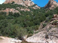 Riparian forest and Mediterranean shrubland vegetation in Sardinia. Photo Giancarlo Dessì in 2007 (Professional Institute of Agriculture and Environment of Cagliari - Wikimedia)
