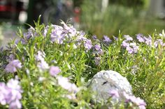 Dobd be a kertedbe! Gardening, Plants, Garten, Lawn And Garden, Planters, Garden, Plant, Planting, Square Foot Gardening