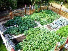 1000 images about vegetable garden ideas on pinterest vegetable garden fences vegetable - Garden ideas to keep animals out ...