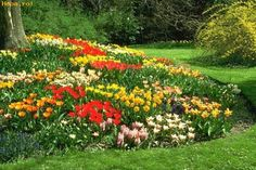 Flores - Jardin hermoso