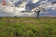 Late summer near Satara, Kruger. Kruger National Park, Late Summer, Predator, Safari, Country Roads, Mountains, Travel, Image, Viajes