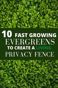 Living Privacy Fences, Natural Privacy Fences, Privacy Fence Landscaping, Shrubs For Privacy, Natural Fence, Living Fence, Backyard Fences, Planting For Privacy, Backyard Privacy Trees