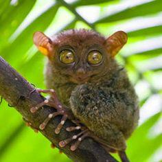 Blog, Owl, Animals, Animaux, Owls, Animal, Animales, Animais