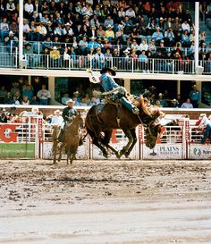 The Calgary Stampede.    Photographer: Andrew Rowat  Published: February 2012 - Get there with Adventure World travel...  www.adventureworld.co.nz