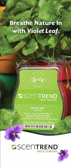 Violet Leaf - Experience the very latest in home fragrance: Violet Leaf, Scentsy's ScenTrend 2013. Violet Leaf is a simple but amazing scent that captures the very essence of green — dewy, fresh, organic, and just a little floral. Use it on its own to experience  its fresh, calming fragrance or add a cube or two to your favorite Scentsy fragrance to customize your favorite scent. $5
