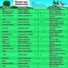 Algumas espécies que atraem a avifauna. Você já plantou alguma delas?  #arvores #tree #arborizacao #jardinagem #bio #biologia #engenharia #biology #nature #preserve #escolha #nativa #verde #floresta #cidade #city #aves #birds #birdwatching #passaros #avifauna #fauna #flora