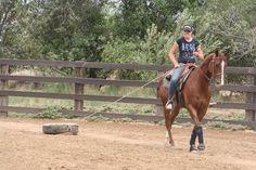 Horse Obstacle Dragging Log
