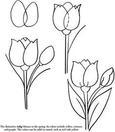 How to draw a flower.