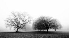 Nieuw in mijn Werk aan de Muur shop: Landschap in de mist.