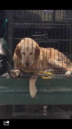 20-Year-Old Dog Dumped At Shelter Learns What Hope Really Means
