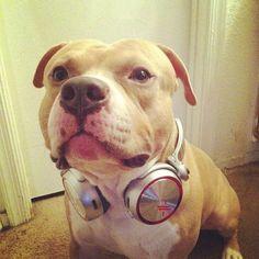 Ne dinleyelim? #Sony #SonyBizde #Hayvanlar #Dog #Music #Kulaklık #Headset #Headphone #Muzik