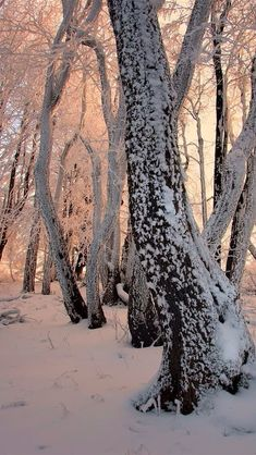 I Love Winter, Winter Time, Winter Photography, Nature Photography, Winter Schnee, Photo D Art, Winter Magic, Winter's Tale, Snow And Ice
