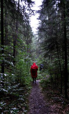 Paseando por un bosque en un dia de lluvia