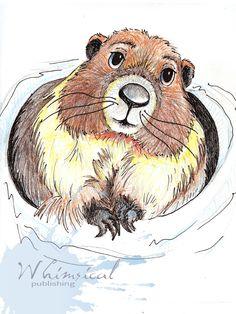 Marmot drawing