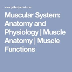 Muscular System: Anatomy and Physiology | Muscle Anatomy | Muscle Functions