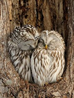 Barn Owl In A Tree Birds Owls Nature And Animal Photography Animal Barn Birds Nature Owl Owls Photog Baby Owls, Cute Baby Animals, Animals And Pets, Wild Animals, Funny Animals, Owl Photos, Owl Pictures, Beautiful Owl, Animals Beautiful