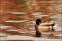 Painting pool! by Aziz  Nasuti Photo Arts on 500px