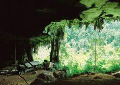 Miri Niah Caves & Lambir Hillsat Gunung Mulu National...