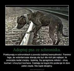 Lidia Birecka Save Life, 5sos, True Stories, Pet Adoption, Pitbulls, Humor, Sweet, Funny, Quotes