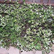 How to get rid of weeds cheap and naturally! | eHow