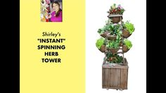 """Put together an """"instant"""" vertical herb tower using a standard wood or metal tomato cage. No construction, this design by Shirley Bovshow, the Foodie Gardene. Vertical Herb Gardens, Tomato Cages, Know Who You Are, Edible Garden, Fresh Herbs, Worship, Tower, Gardening, Vegetables"""